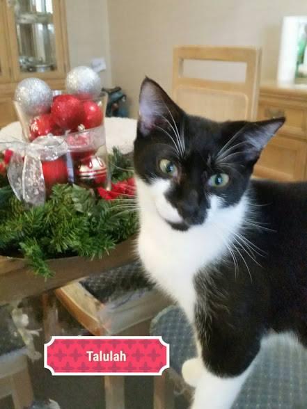 Adoptions At Petsmart