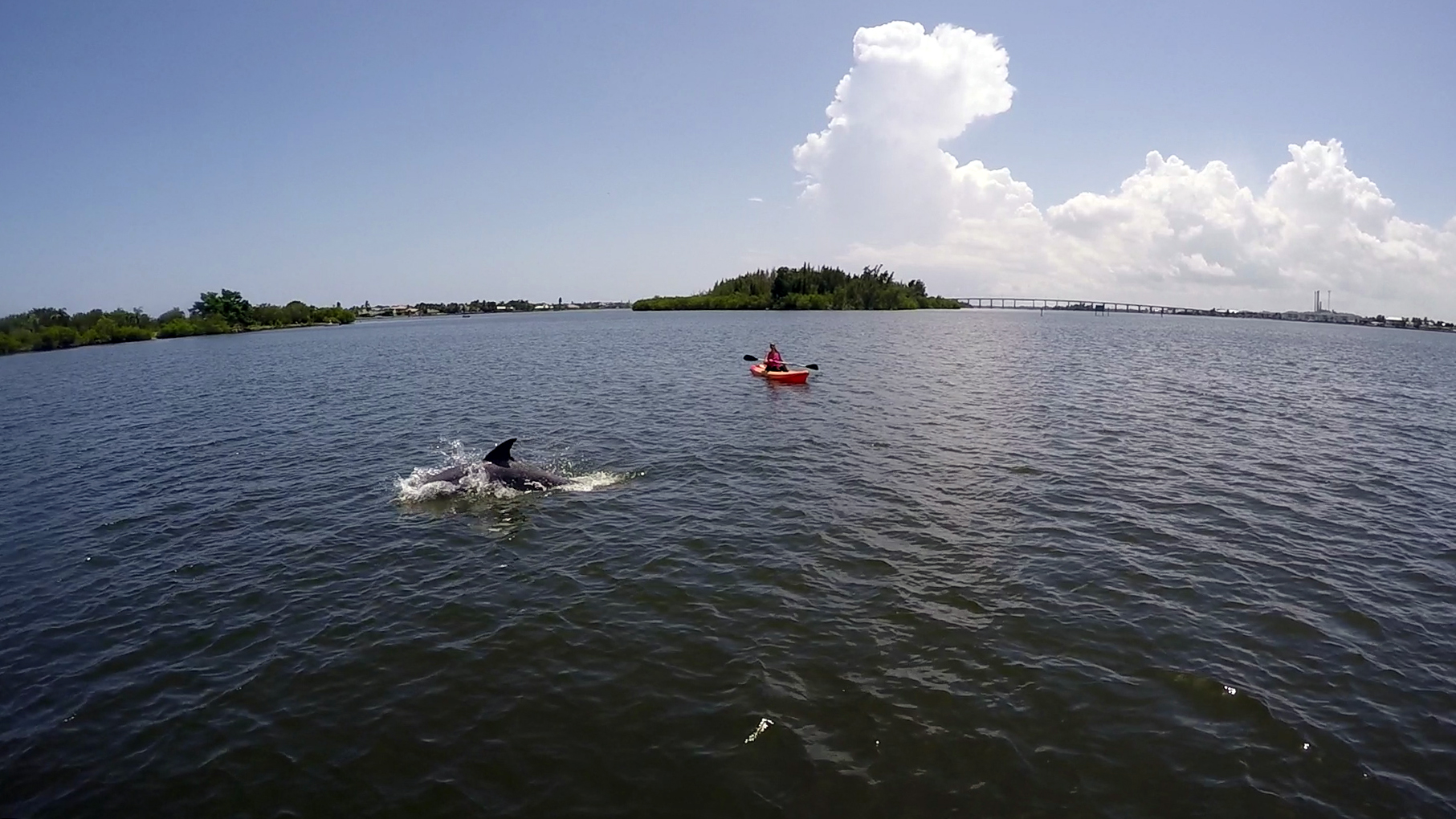Paddle Board And Kayak Tour Of Vero Beach