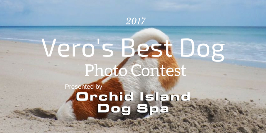 Vero's Best Dog Photo Contest