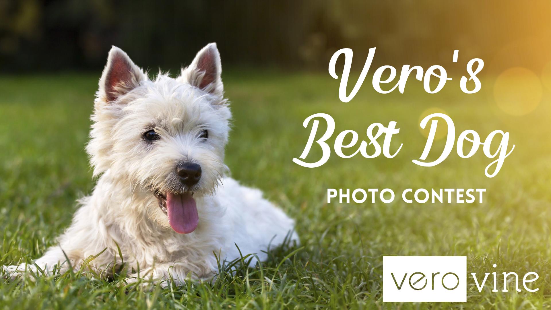 Vero's Best Dog Photo Contest 2021
