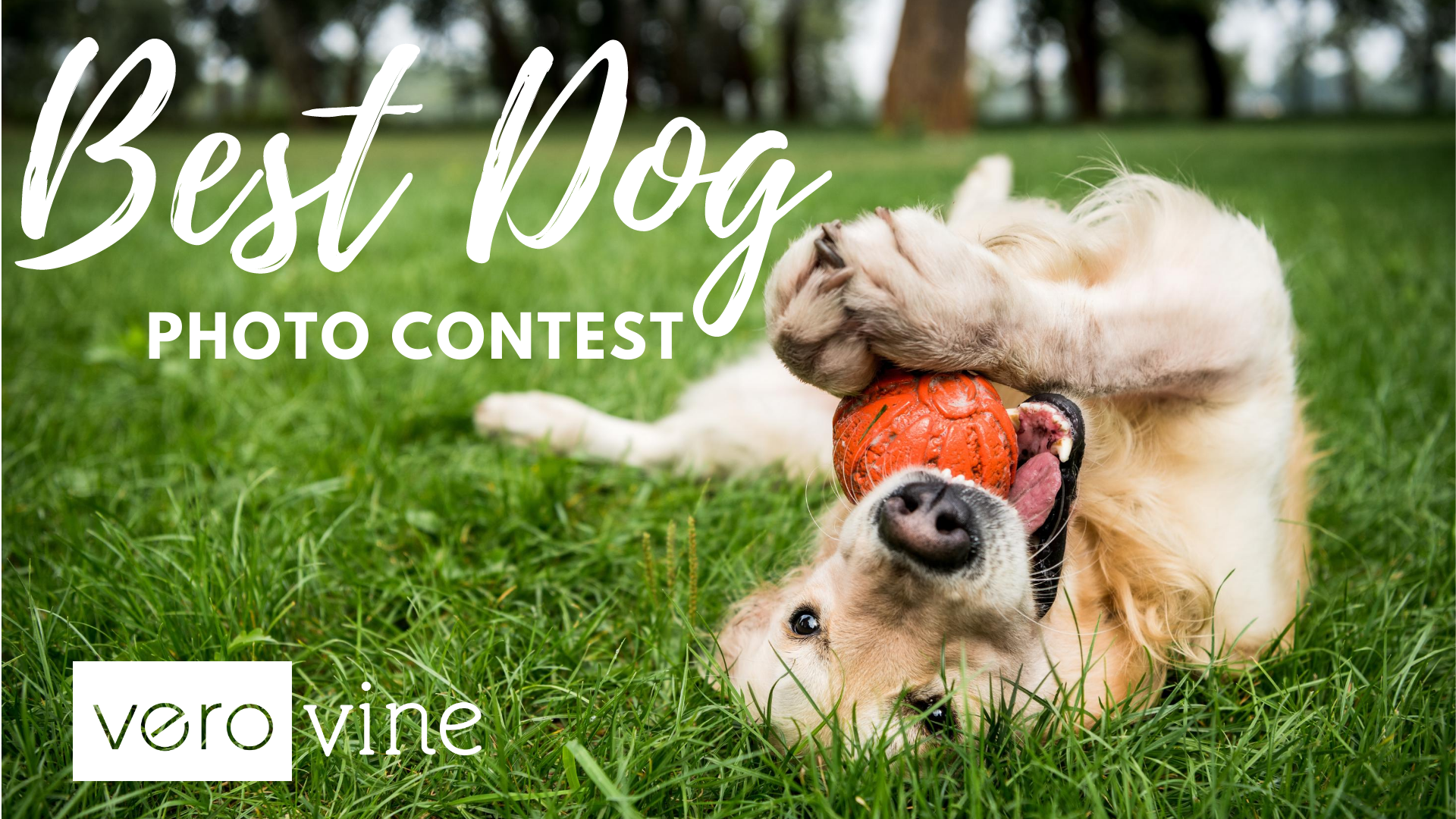 Vero's Best Dog Photo Contest 2020